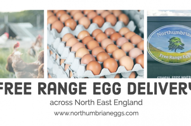 northumbrain eggs